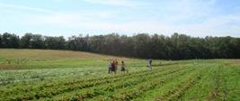 WE ramassage de pommes de terres les 19 et 20 aout !