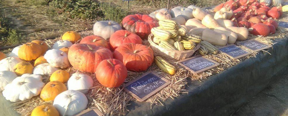 La Saison de cueillette est terminée! Nous vous accueillons desormais les lundi, mercredi, vendredi et samedi de 10h à midi pour la vente directe
